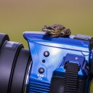 Pentax K-30, Sigma 150-500mm and a frog