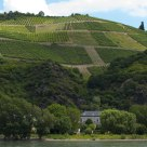 Germany vineyards.