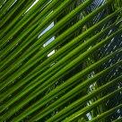Tropical Louver
