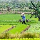 Vietnamese Vegetable