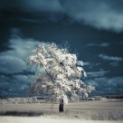 Infra tree