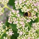 小花和蜜蜂