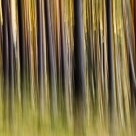 Movement in the forest