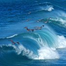 Soaring Over The Waves