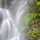 Water & Flowers