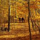 A walk in the Golden Forest