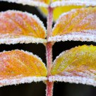 Colorful frost