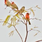 Finch Cluster