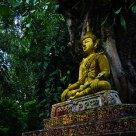 Buddha in Jungle