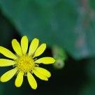 绿影下的小黄花