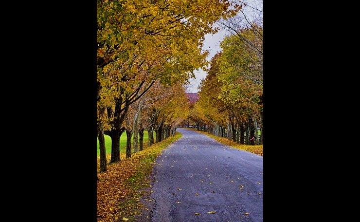 Archbridge Rd. in Autumn