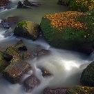 River Treja