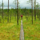 Path in the Taiga