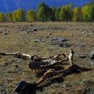 Horse'bones in field