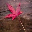 Wooden Leaf #1