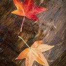 Wooden Leaf #2