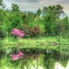 Spring Rosebud