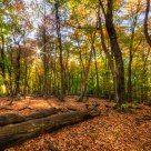 Autumn Forest HDR