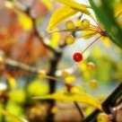 Fruit in autumn