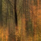 Autumn trees-3
