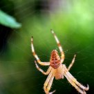 araignée en toile