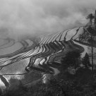 Rice terrace in B&W
