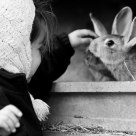 A story of rabbit