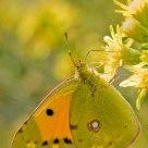 Mariposa a contraluz