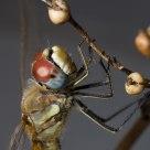 Bodegón de libélula 1