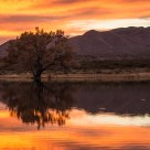 Sunset at The Bosque del Apache Wildlife Reserve