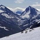 Reindeer in Jotunheimen