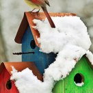 Bird on a