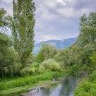 Fiume Fibreno con Cipresso / Fibreno River and Cypress
