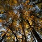 Hailuo forest