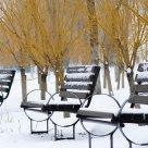 运河雪韵-小景