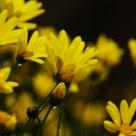 twinkle yellow