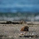 Shell ....