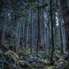 Carbon Woods