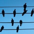 10 Doves