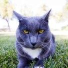 Kohler Kitty