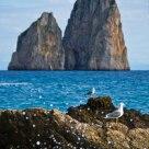 Seagulls and Faraglioni