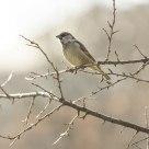 Just a sparrow