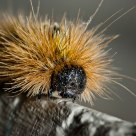Portrait of a Caterpillar
