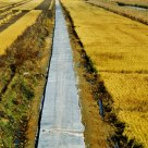 Path of Harvest