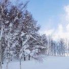 Snow Hokkaido  by  Q-01 Lens