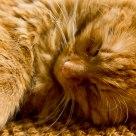 Sleeping…