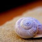 Caracol/snail