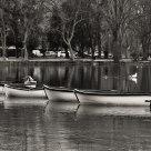 Las barcas del lago