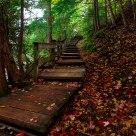 Trail in Gatineau Park