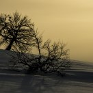 Naked trees in winter landscape